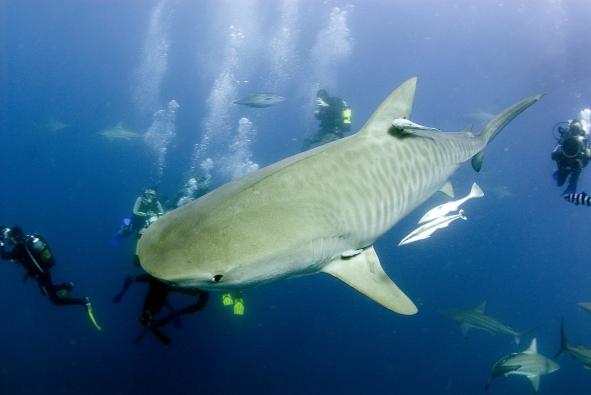 andy's shark
