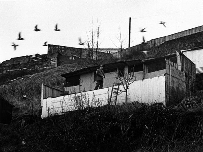 pigeon lofts