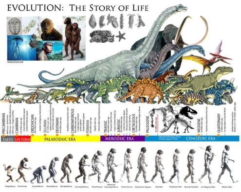 63dc05ea8a93b5b3c9cd98b027a2d5b1--human-evolution-science-classroom